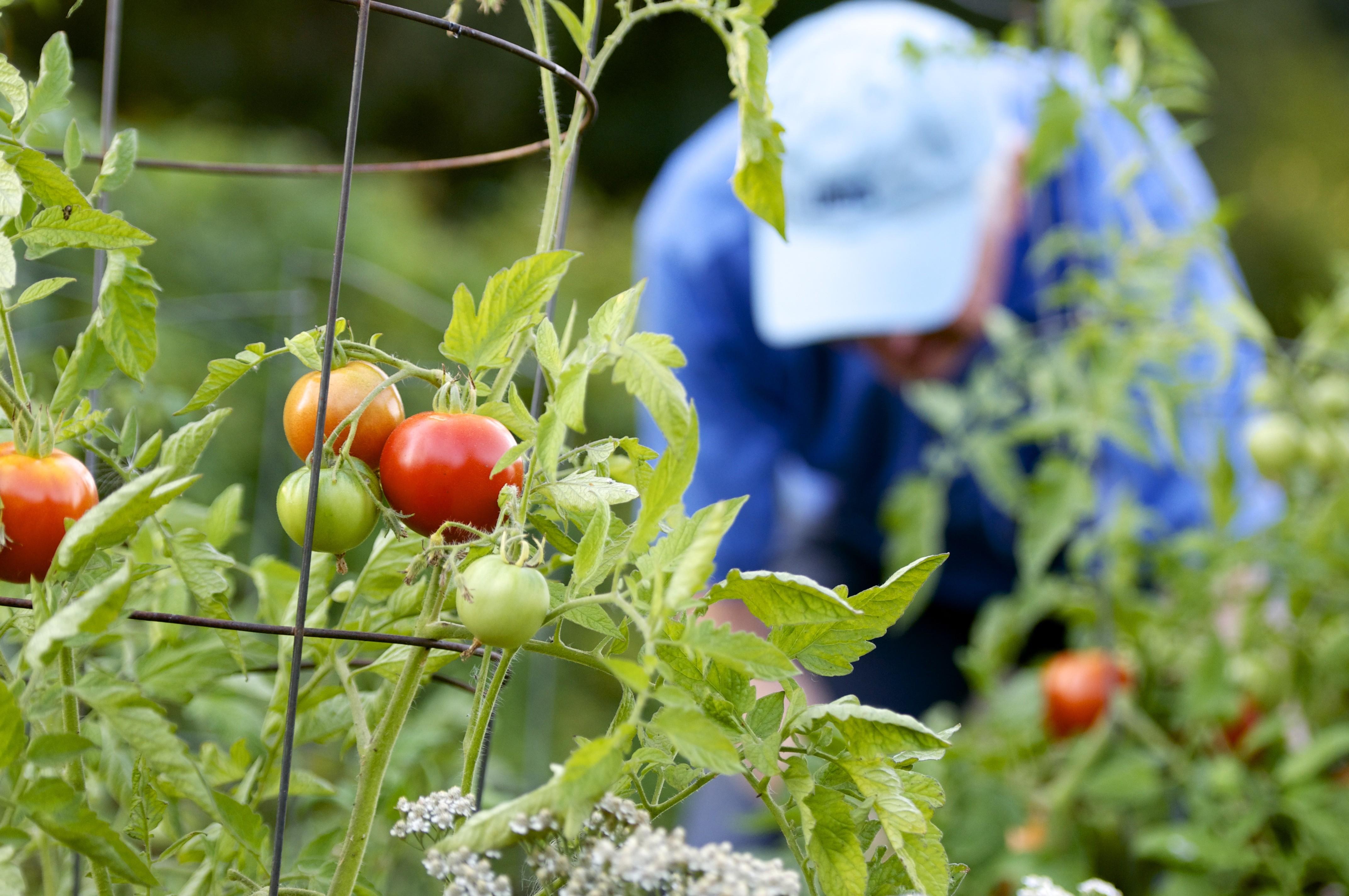 RV Gardening Stills 024.jpg